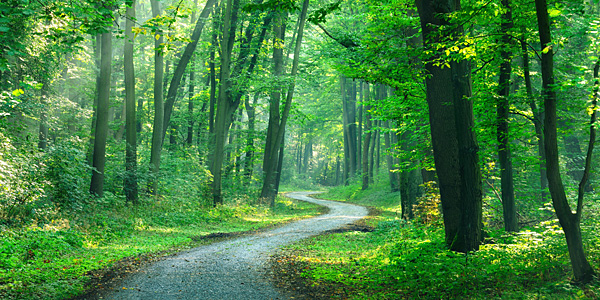 Winding path though green woods