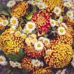 Bouquet of mum flowers
